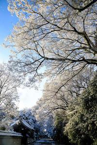 京都御所の雪景色 - 花景色-K.W.C. PhotoBlog