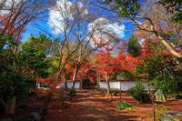 京都の紅葉2016 浄住寺参道の紅葉 - 花景色-K.W.C. PhotoBlog