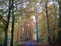 英国ナショナルトラストのウォーキング・ホリデー - ブルーベルの森-ブログ-英国カントリーサイドのライフスタイルをつたえる