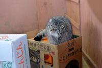 箱入り娘 - 動物園へ行こう
