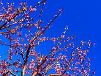 日曜日にパース駅周辺を散策♪(rosewater,white choc &pistachio、green tea&mochi cake) - 南米・中東・ちょこっとヨーロッパのアイスクリーム旅