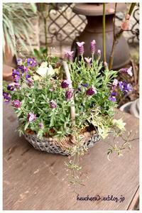 フレンチラベンダーで寄せ植え♪ - 小さな庭 2