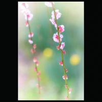 ☆ 写花 248 ☆ - ON ANY SUNDAY 2.............