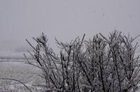 春の雪 - きょうから あしたへ