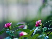 赤塚植物園 2月末に 2 - 光の音色を聞きながら Ⅱ