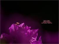 """春色の輝き - ATELIER 302 """" 時の色 """""""