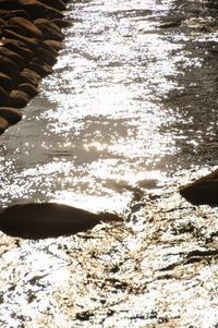 修善寺の旅~桂川~ - 僕の足跡