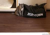 ゾゾネコ - 賃貸ネコ暮らし|賃貸住宅でネコを室内飼いする工夫