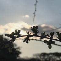 新芽の季節 - ドコカ遠くと日々のアシモト