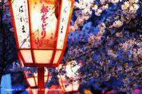 桜の準備はじめました。♯2 - あ お そ ら 写 真 社