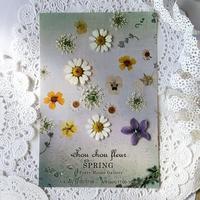 chou chou fleur ✿ SPRING✿ - tuboniwanisaku