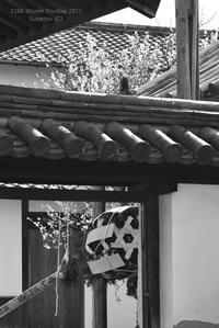 白梅 @ 1266回 修二会 - 東大寺が大好き