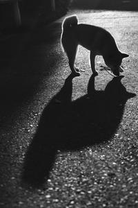 shadow (3cut) sakura -     ~風に乗って~    Present