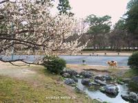 京都御苑の梅園のお散歩@京都 - アリスのトリップ