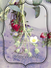 la fraise - Foretoile~フォレトワール~ アトリエと日々のこと