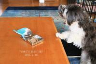 B.B & Chipo* おやつ実験!?・Ⅴ(最終章) - FUNKY'S BLUE SKY