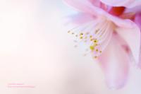 春の色 - jumhina biyori*