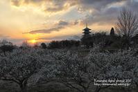 備中国分寺の夕景 3/6 - 気ままな Digital PhotoⅡ