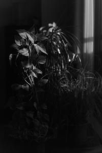 gentle light from the window - S w a m p y D o g - my laidback life