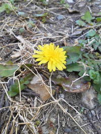 わたしの小さな庭の花たち - あしもとに地球
