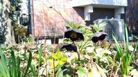 春のおとずれ - 自然の食卓 ブログ