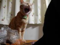 金魚の金吾とお金の話 - 愛犬家の猫日記