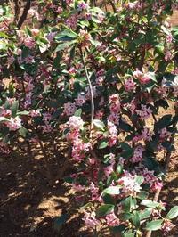 眠いのは春が来たからでしょうか… - テディベアのブログ Urslazuli