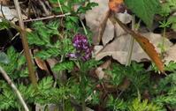 春の兆し その3 - 紀州里山の蝶たち