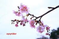 蜂もよろこぶ - ジージーライダーの自然彩彩