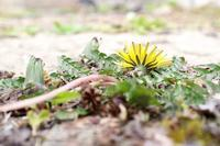 春色きいろ - お庭のおと
