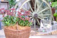 お花の入荷とお店の駐車場のお知らせ - mon dimanche blog