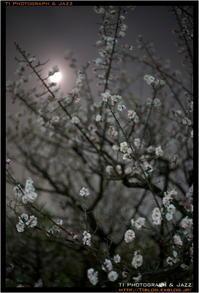 夜間梅林散歩 - TI Photograph & Jazz