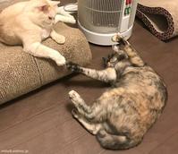 うえーい - 賃貸ネコ暮らし|賃貸住宅でネコを室内飼いする工夫