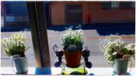 事務所の窓辺。 - くらしの手帖