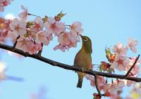 小鳥日和 - イーハトーブ・ガーデン