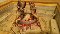NHK総合「シブ5時」どんこ - 料理研究家ブログ行長万里  日本全国 美味しい話