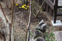クロッカス - 小さな森のキキとサラ
