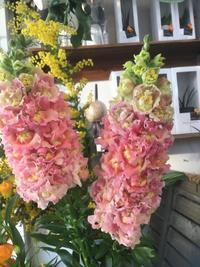 これからの暮らし方を模索する - ルーシュの花仕事