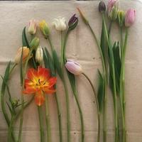 ikanika 花の会 「チューリップのくるくる」・・・♪ - 手づくりひとてまの会『文京区 初心者さん向け洋裁教室』