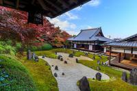 Finale!京都の紅葉2016 晩秋の京都総集編 - 花景色-K.W.C. PhotoBlog
