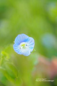 足もとの小さな春 - jumhina biyori*