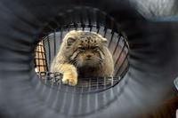迫り来るネコ - 動物園へ行こう