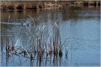 水温む池 - muku3のフォトスケッチ