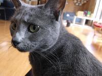 小島信夫「アメリカン・スクール」 - ネコと文学と猫ブンガク