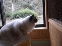 世界の猫宿 - ネコと文学と猫ブンガク