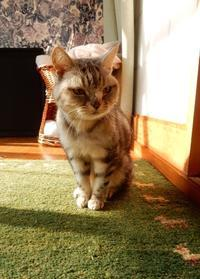 花組、日向ぼっこ - ご機嫌元氣 猫の森公式ブログ
