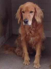 飼い犬について思うこと - ハチドリのブラジル・サンパウロ(時々日本)日記