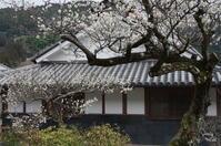 五条市 一の木ダム~賀名生~川岸 2/4 - ぶらり記録(写真) 奈良・大阪・・・