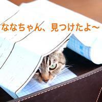 にゃんこ劇場「ななちゃん、かくれんぼ中」 - ゆきなそう  猫とガーデニングの日記