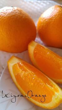 フルーツ大好き★清見オレンジ - 料理研究家ブログ行長万里  日本全国 美味しい話